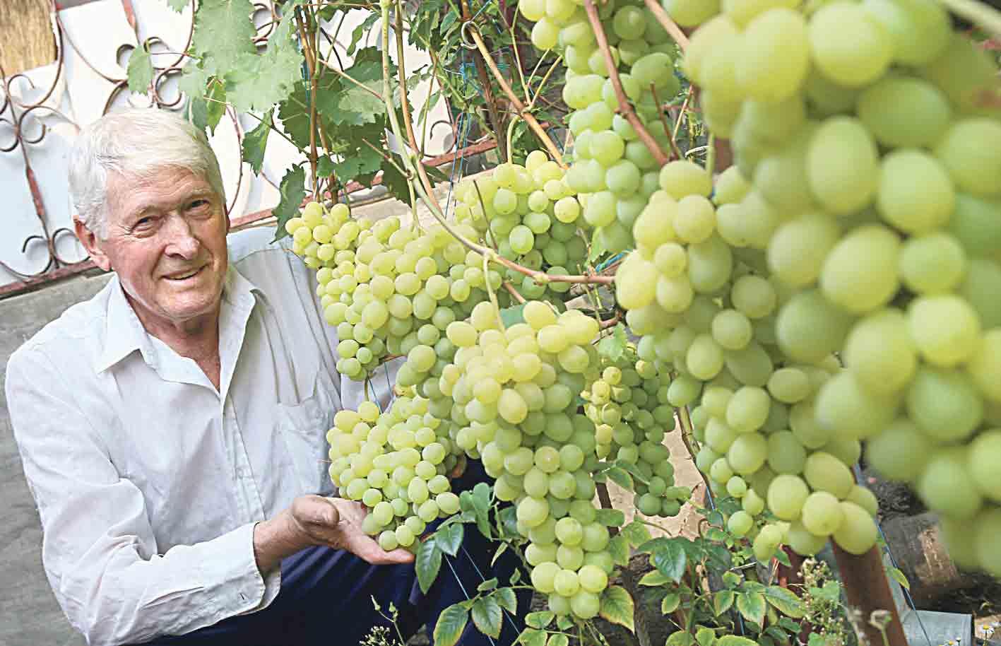 Прийшла пора відкривати виноградні лози