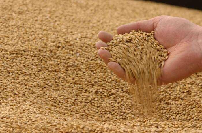 4 мільйони тонн зерна зібрано на Вінниччині