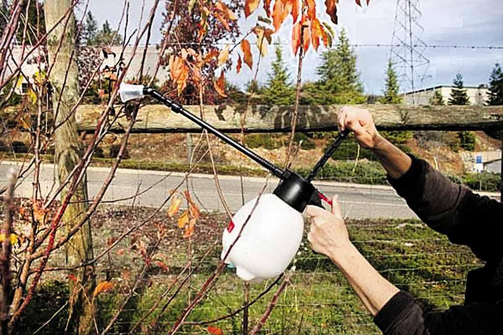 Час позбуватися шкідників. Що робимо в саду у листопаді