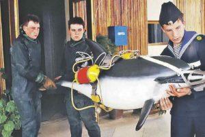 Програму для дельфінів-розвідників розробляли на Вінниччині