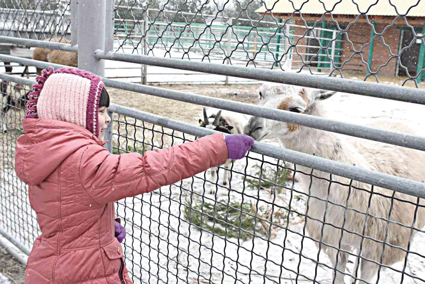 «Подільський зоопарк» виграв грант ЄС на 1,7 млн грн.