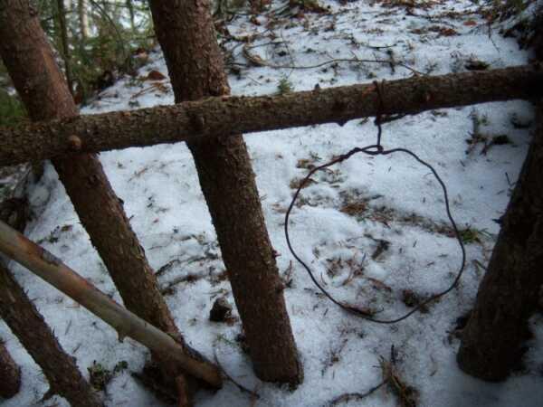 Побільшало браконьєрів-«петельників» – Бершадські мисливці та природоохоронці б'ють на сполох