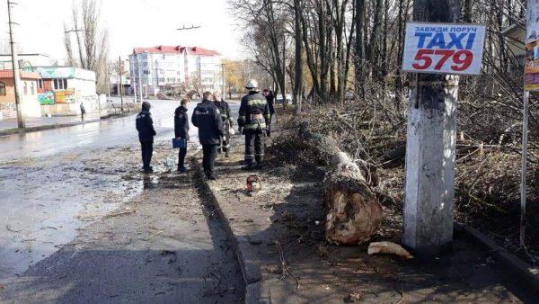 Дерево впало на дитину. 12-річна вінничанка загинула на місці