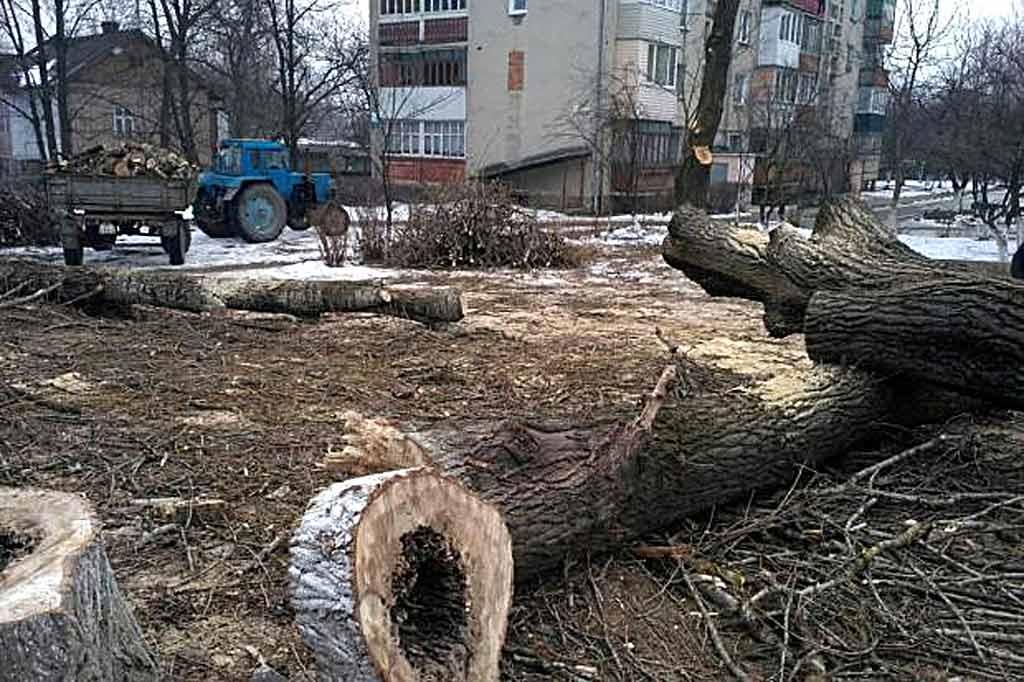 Чому в центрі Муркурилівців вирізали дерева?