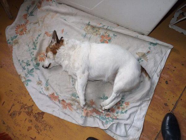 «Задля розваги перехожий вбив мого собачку!»