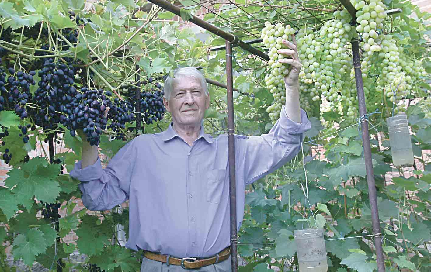 Які сорти винограду найкращі?