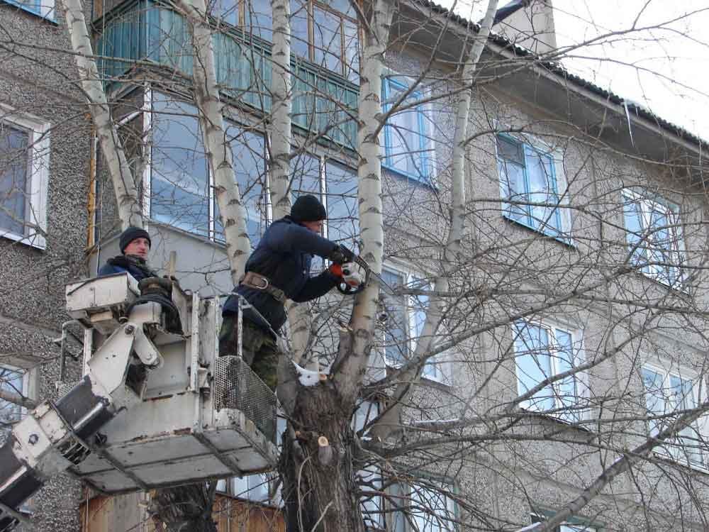 Куди впадуть дерева? На дитсадок, газопровід чи мені на хату? Зріжте їх, щоб не сталось нової біди