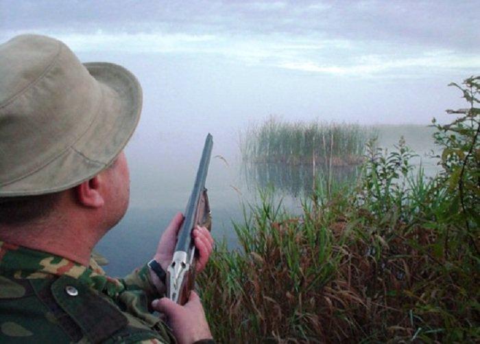 На Вінниччині розстріляли лебедів?