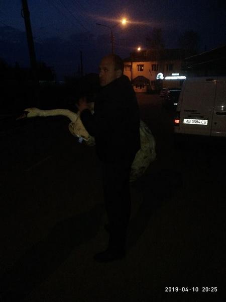 Хто стріляв у лебедя на Бугу? В зоопарку рятують пораненого красеня…