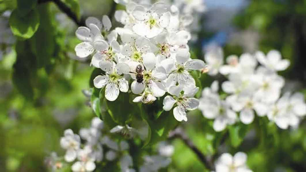 Вінниччина потопає у білім цвіті