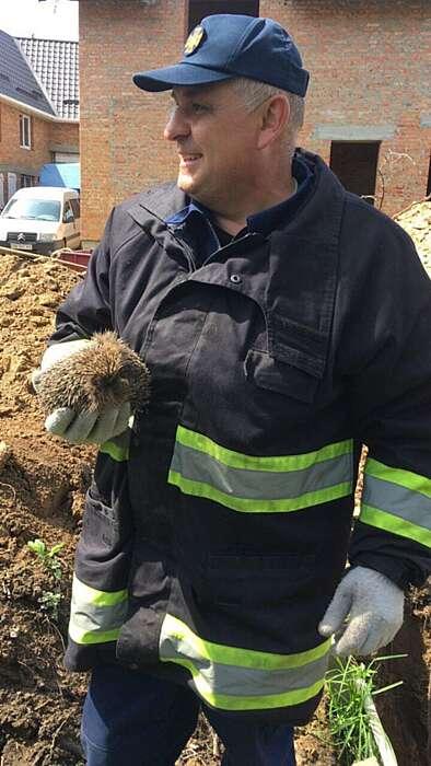 Їжачка та двох собак врятували з котловану у Немирові