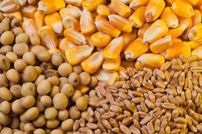 Вінницькі кукурудзу, сою, пшеницю, олію, соки, масло, мед купує Європа