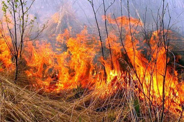 У Немирівському районі жінка загинула після спалювання трави