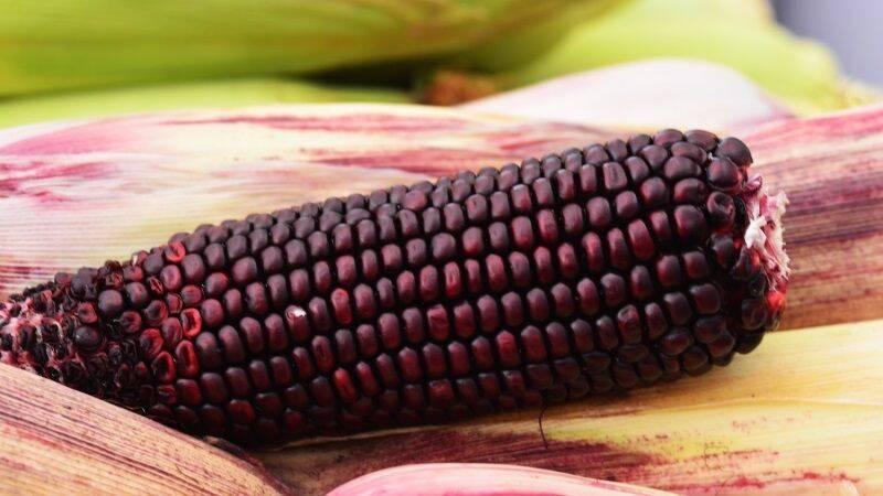 Фіолетова кукурудза від Мнагор – хіт серпневого VinCornFest у Вінниці