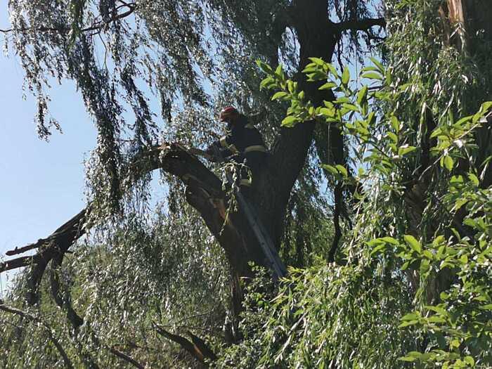 На Вінниччині дерева падали на автошляхи