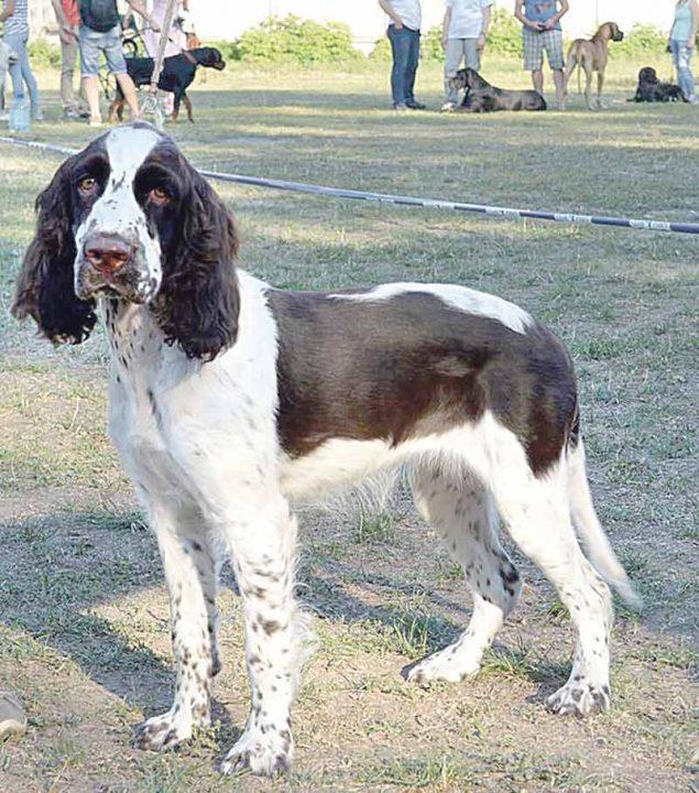 Як у Вінниці обрали найсильніших та найрозумніших собак