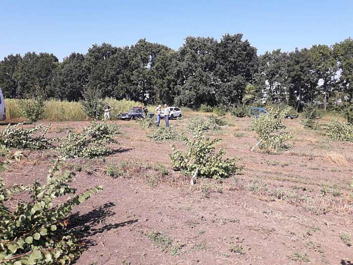 5 гектарів саду вирубали фермеру з Суботівки! Вся країна стала на захист потерпілого. Кого він підозрює?