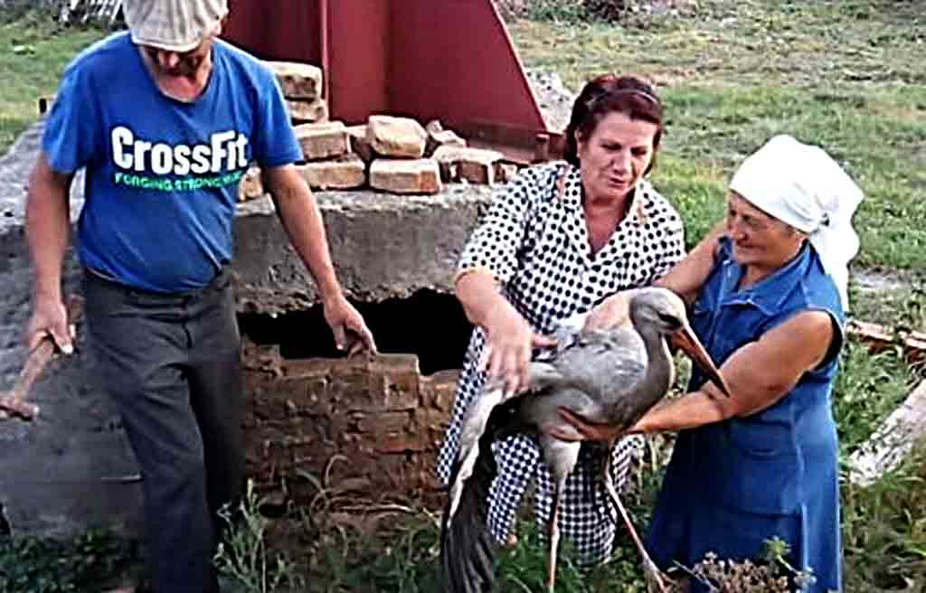 Лелеку з труби котельні рятували люди в Гущинцях