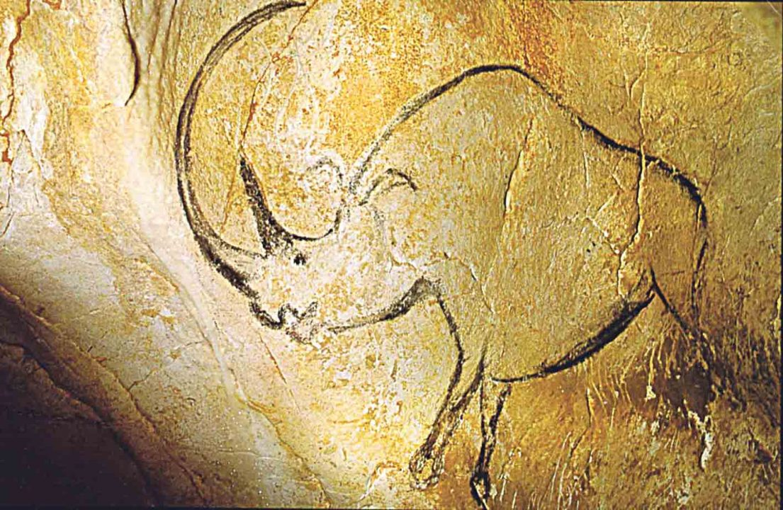 Останки носорогів знайшли у Гопчиці. Як і коли вони жили на Вінниччині – з'ясовував наш кореспондент (відео)