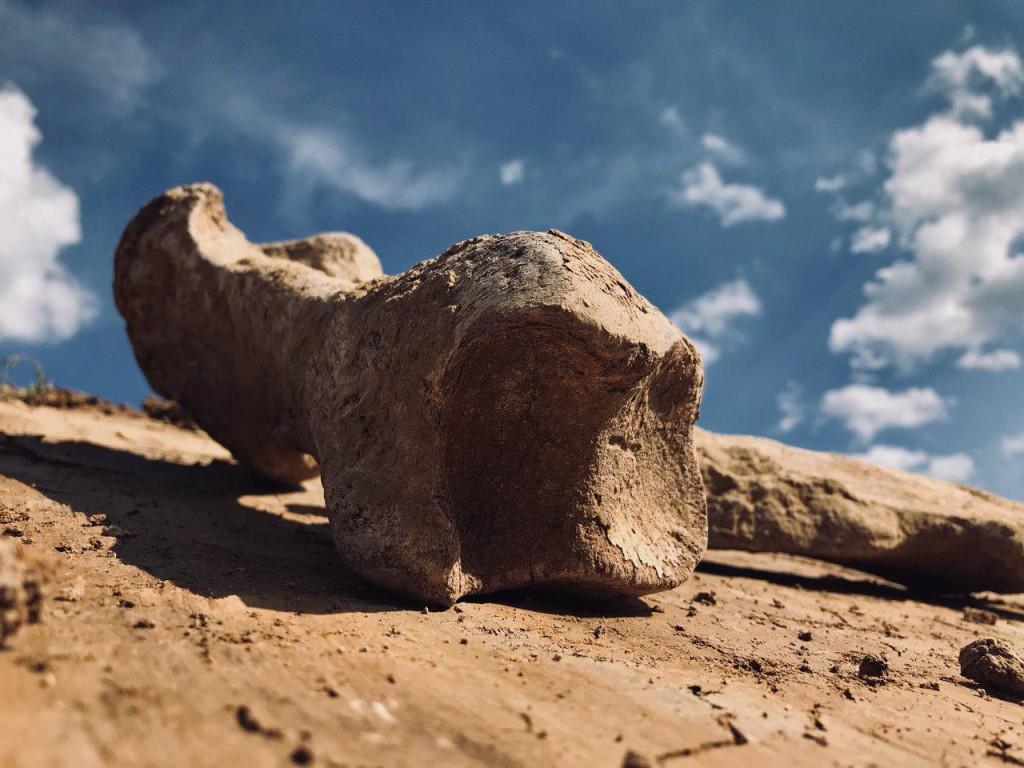 Кістки викопного шерстистого носорога знайшли у Гопчиці Погребищенського району