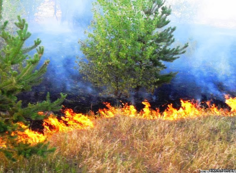 На Тиврівщині оштрафували підпалювачів стерні