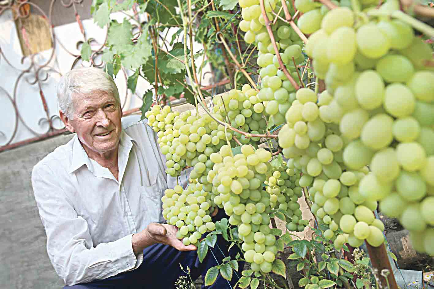 60 сортів винограду росте у саду Віктора Яновича