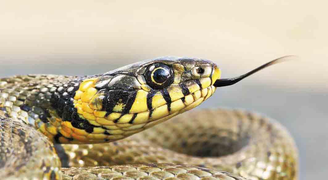 Вінничан атакувало сімейство змій. Люди бояться виходити на вулицю
