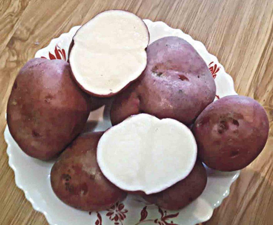 Яку картоплю обрати для свого городу?