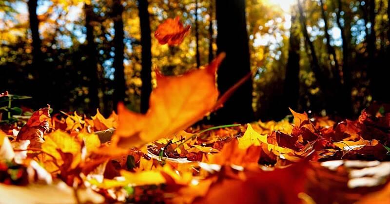 Унікальну середу із пізніми веснянками обіцяють синоптики 2 жовтня