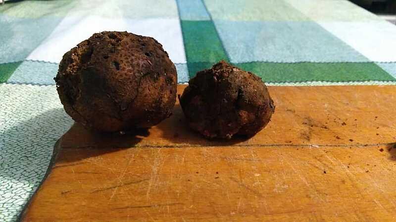 Делікатесні трюфелі знайшли у ладижинському лісі