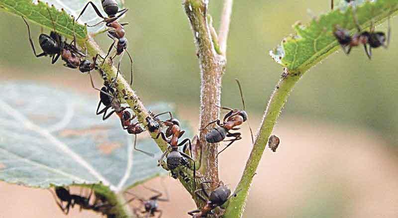 Нашестя невідомих комах на Вінниччині