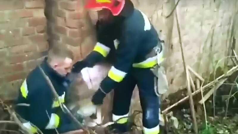"""У Вінниці цуценята застрягли між будовами. Чотирилапих визволяли з полону """"надзвичайники"""" (відео)"""