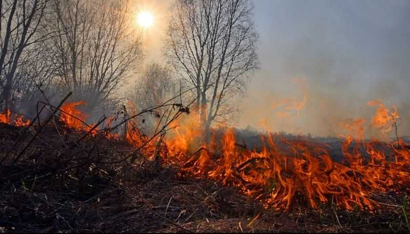 За спалення сухої рослинності буде максимальний штраф 153 тис.грн.
