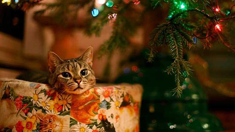 Як відпочиваємо на Новий рік і Різдво