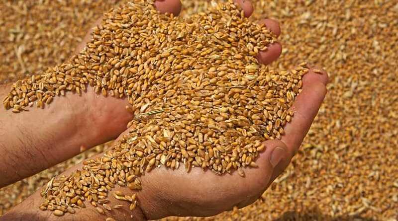 Найвища врожайність зернових — у Вінницькій області