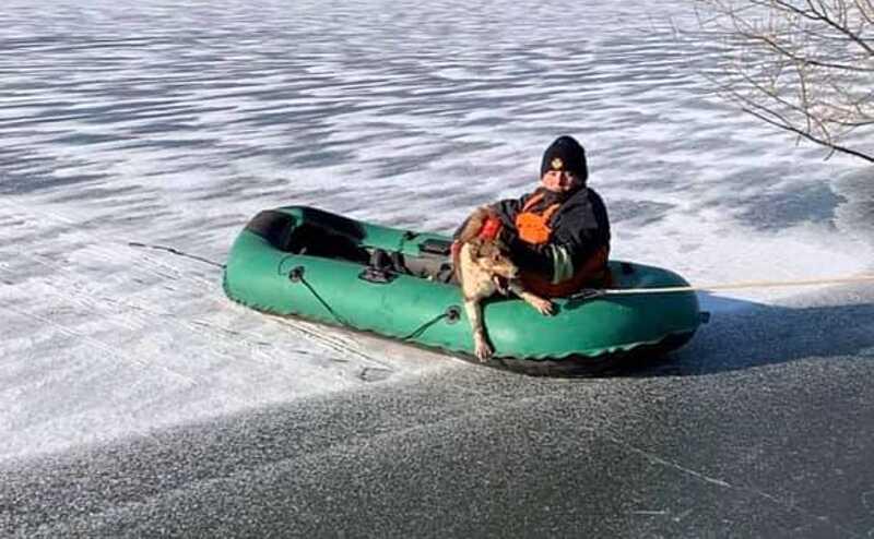 Собаку з водойми витягли рятувальники