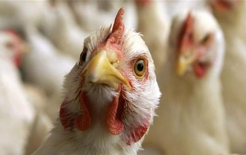 ЄС зупинив імпорт курятини з України через спалах пташиного грипу на «Хуторі» в Немирівському районі