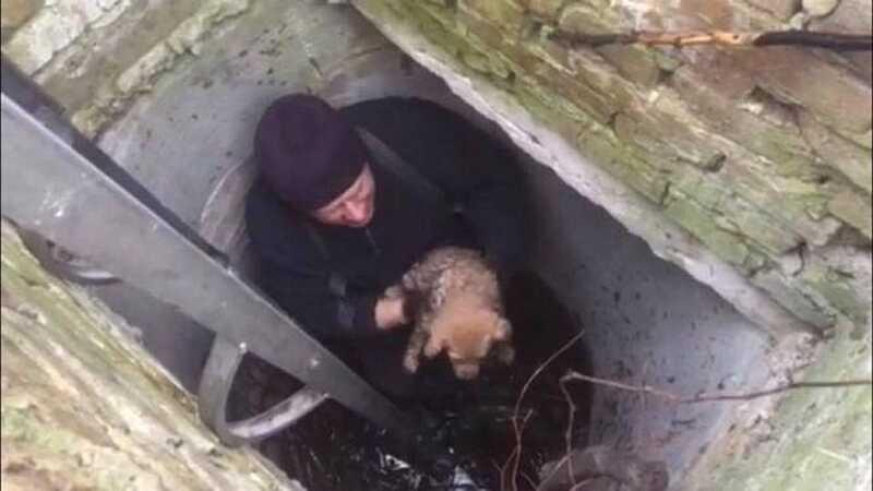 Врятували цуценя, яке впало у каналізаційний колодязь