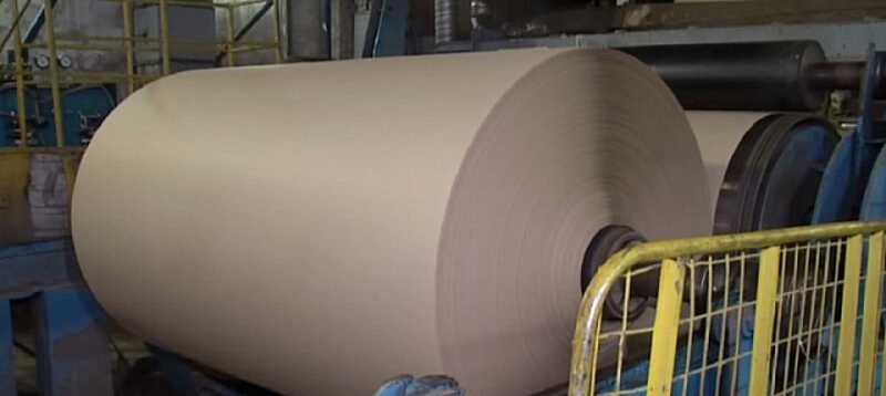 Папір з опалого листя почали виготовляти в Україні