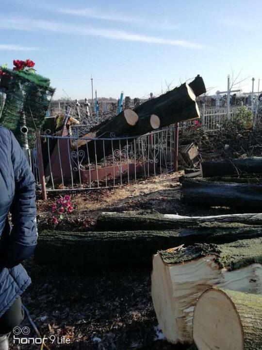 Вандалізм на цвинтарі у Гавришівці. Пам'ятники та хрести потрощили під час обрізання дерев?