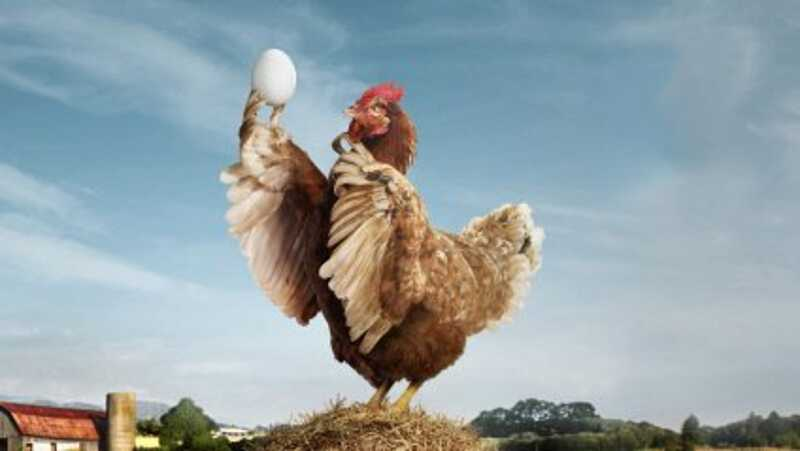 Від вінницької курятини відмовився Казахстан