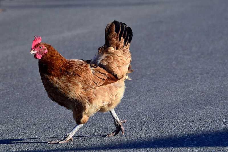 Вінницьку курятину заборонив Кувейт, ОАЕ та Китай