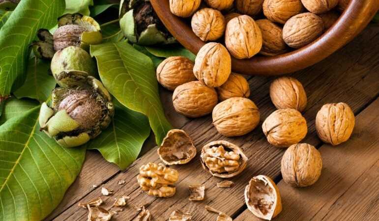 Перегородки горіхів — засіб від багатьох хвороб