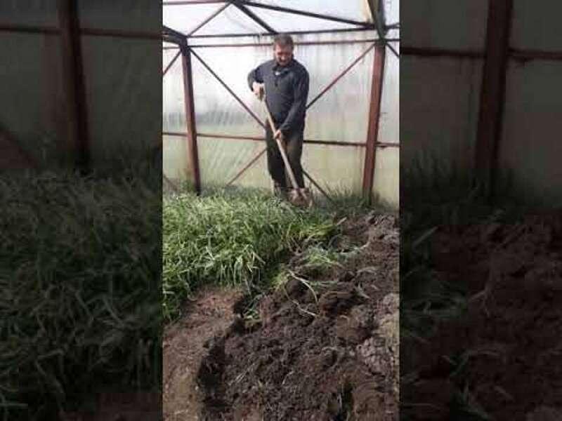 «Ситуація може мати критичні наслідки» – мер Вінниці про відео з літинським фермером, який перекопав цибулю у теплиці