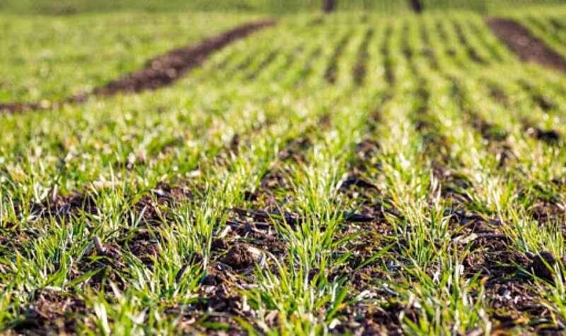 На Вінниччині продовжується посівна кампанія. Як вплинуть кліматичні зміни на урожай 2020 року?