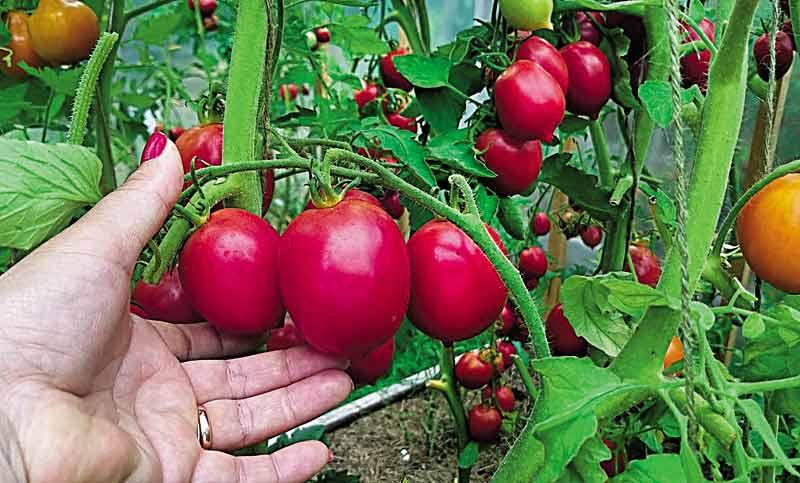 Атошну розсаду вирощує Сашко із 32 БП