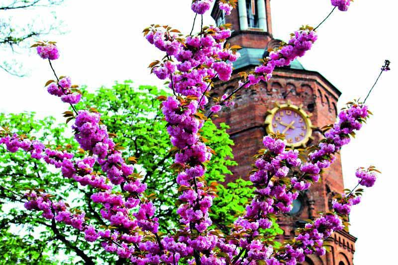 Весна на карантині (вірш)