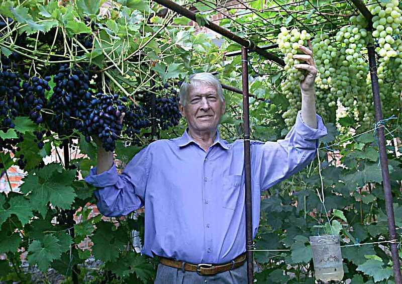 Весняні турботи виноградаря