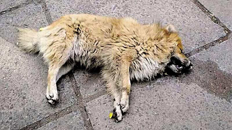У Бершаді повстали зоозахисники через масове отруєння тварин!