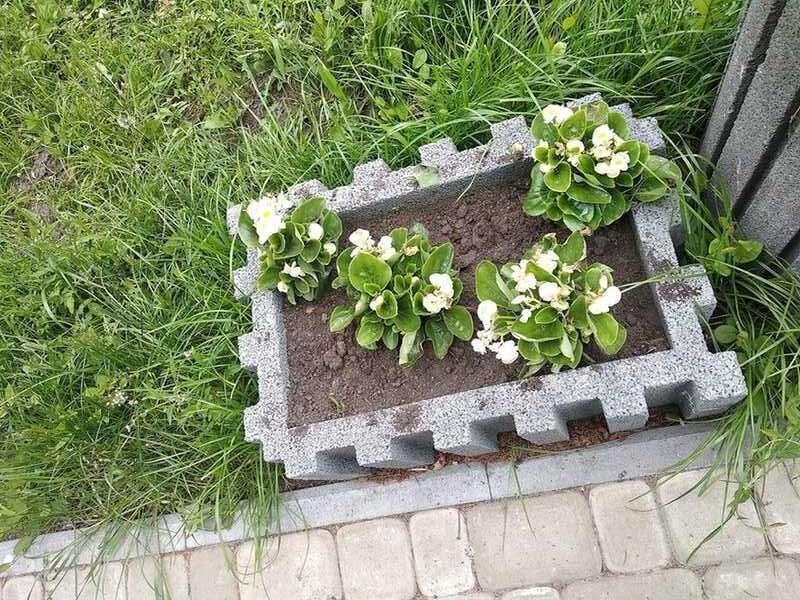 В Козятині із клумб покрали квіти!